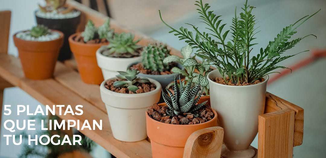 5 plantas de interior que limpian el aire de tu casa